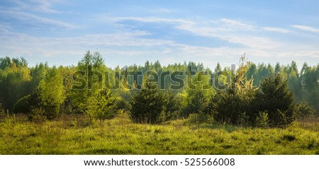 tender and fresh young trees in spring