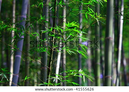 tender foliage and bamboo stalks
