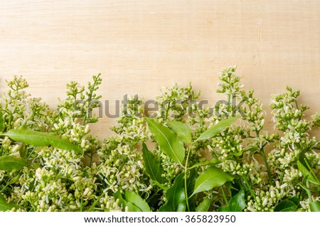 Tender medical neem leaves and flower on wood background - stock photo
