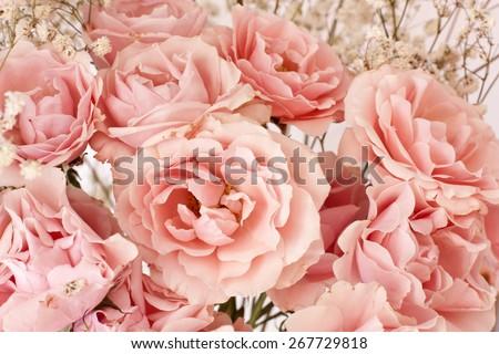 Tender pink tea roses background - stock photo