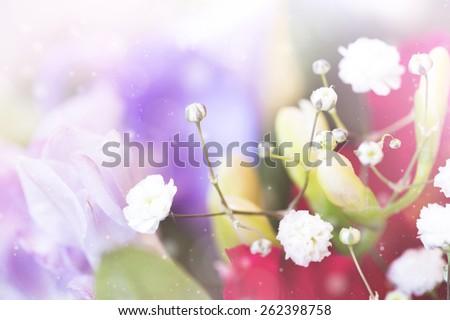 tender spring flowers  - stock photo
