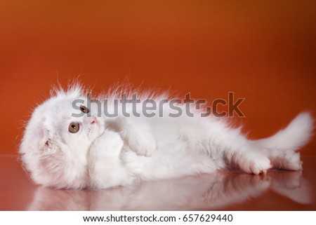 Tender White fluffy kittens on a red background