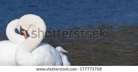 Tenderness - stock photo
