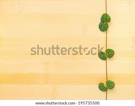 tendril Ceropegia Woodii on bamboo wooden background - stock photo