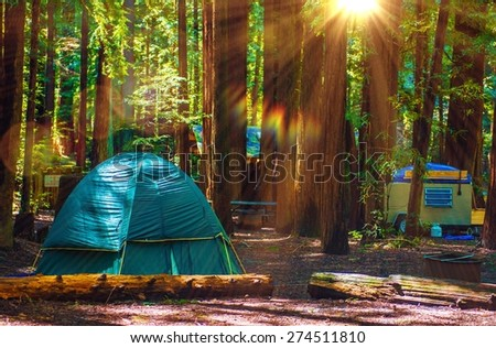 Tent Camping in the Redwood National Park in California, United States. Forest Camping. - stock photo
