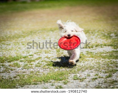 Teo and his fresbee  - stock photo