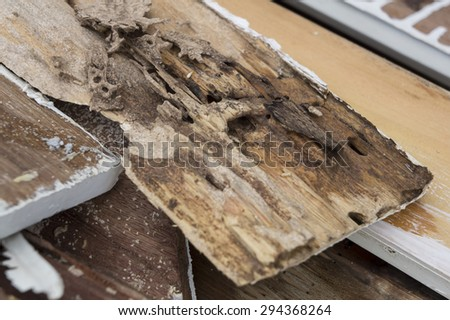 termite damage rotten wood eat nest destroy