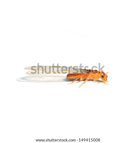 Termite isolated on white background - stock photo
