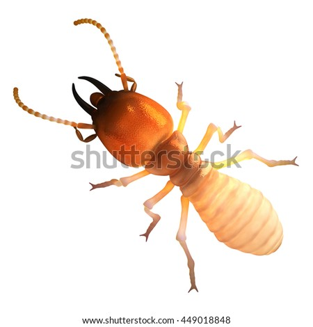 Termite Isoptera Isolated on White Top View 3d Render Illustration