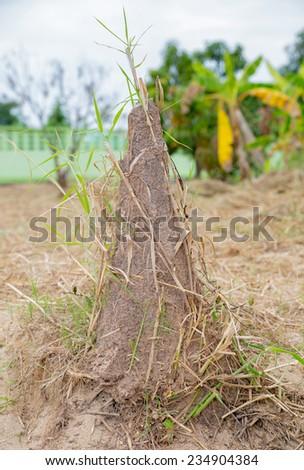 Termite mound,Thailand - stock photo