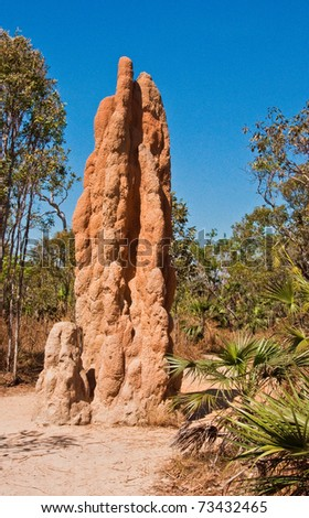 termite mounds in northern territory, australia