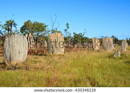termite nest - stock photo
