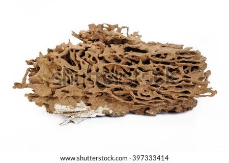 Termite nest on white background - stock photo