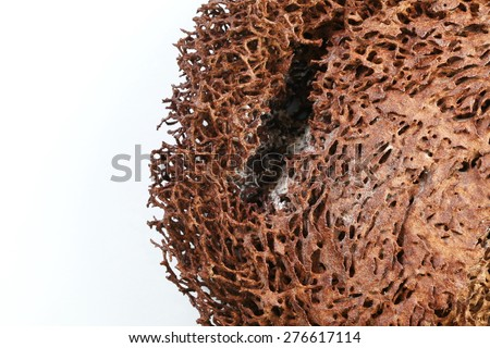 Termite nest texture surface background super macro shot represent the insect concept related idea. - stock photo