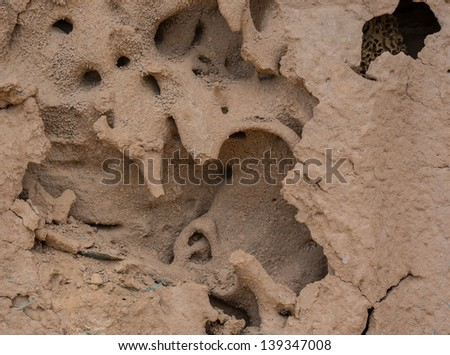 Termite nests . - stock photo