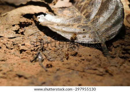 Termite on soil floor and dry leaf - stock photo