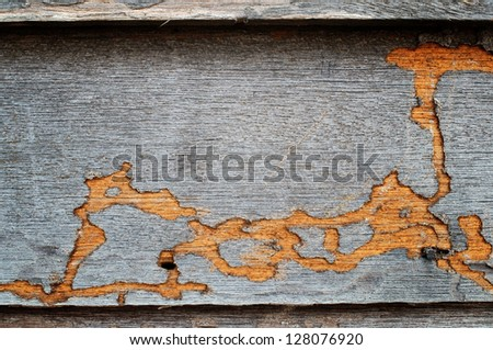 termite track on wooden wall. - stock photo