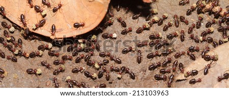 Termite work as team in the nature