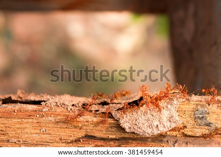Termites, ants fighting termite on rotten wood, with termite holes. - stock photo