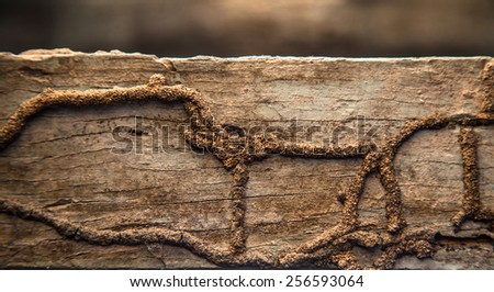 Termites eat wood surface, a wood that is naturally rich termites as discontinued operation and long life. - stock photo