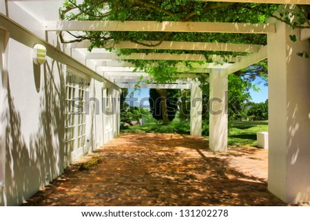 Terrace covered by grape and ivy. Shot near Kuilsriver and Cape Town, Western Cape, South Africa. - stock photo