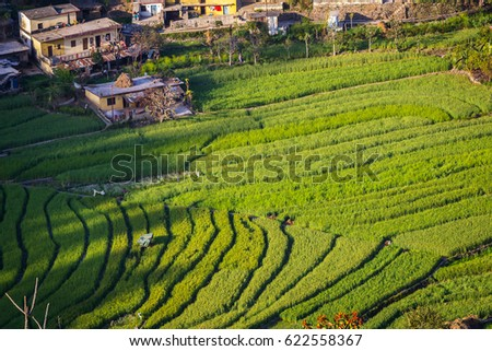 Terrace farming stock images royalty free images for Terrace farming in india