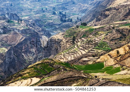 terrace fields in the mountain canyon