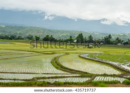 Terrace rice fields at mountain in Chiang Mai, Thailand, natural background