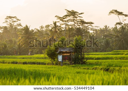 Terrace rice fields on a sunny day, Bali, Indonesia.