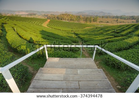 terrace wood floor on tea plantation at north, Thailand
