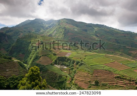 Terraced fields of Dieng plateau, Java, Indonesia - stock photo
