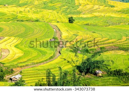 Terraced fileds in Northern Viietnam. This landscapes located near the border between Vietnam and China