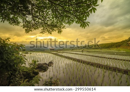 Terraced paddy field in Mae Chaem village Chaing mai Thailand - stock photo