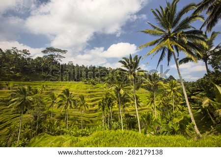 terraced paddy fields, Bali, Indonesia - stock photo