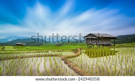 Terraced Rice Farm On Rainy Season Of PaBongPeng Chiang Mai, Thailand - stock photo