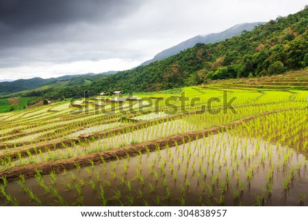 Terraced Rice Field in Ban Papongpieng, Chiangmai, Thailand