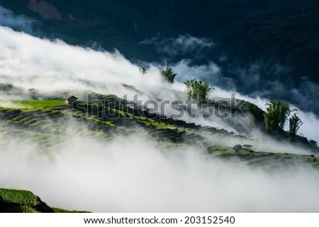 Terraced rice field in cloud in Sapa, Vietnam  - stock photo