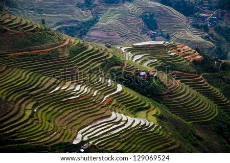 Terraced rice field in Ha giang province, Vietnam - stock photo