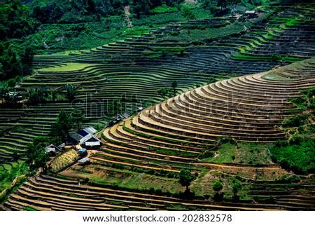 Terraced rice field in Laocai province, Vietnam  - stock photo