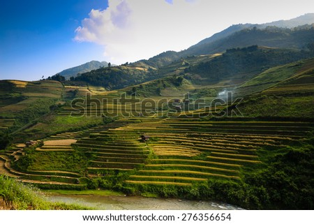 Terraced rice field in North of vietnam