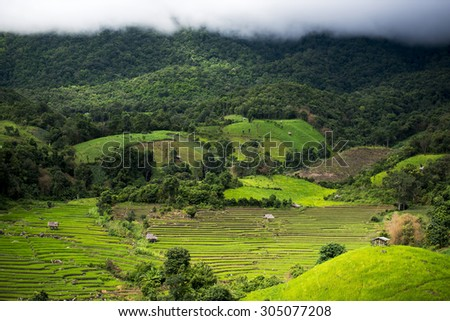 Terraced rice field in Pa Pong Pieng. Chiang Mai ,Thailand.