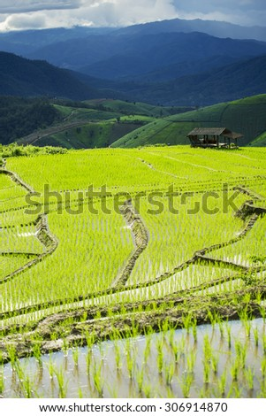 Terraced rice field in Pa Pong Pieng. Chiang Mai ,Thailand. Selective focus.