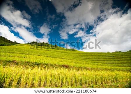 Terraced rice field in rice season in Mucangchai, Vietnam  - stock photo