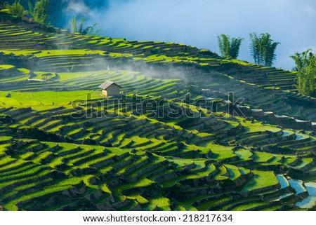 Terraced rice field in water season in Laocai province, Vietnam  - stock photo