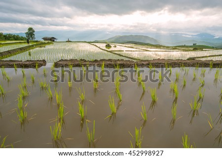 Terraced Rice Field with blurred foreground, Chiangmai, Thailand