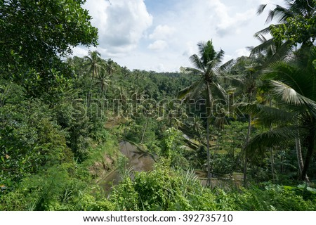 Terraced rice fields and coconut plantation in a rural village in Ubud, Bali Island - stock photo