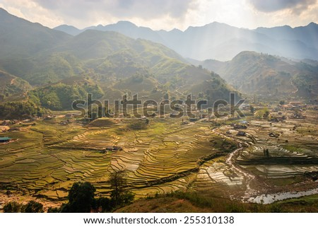 Terraced Rice Fields in Vietnam