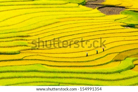 Terraced rice fields - three women visit their rice fields in Mu Cang Chai, Yen Bai, Vietnam - stock photo