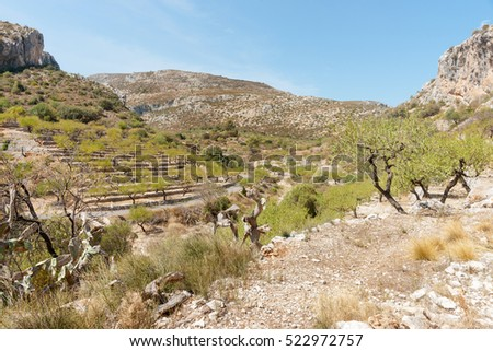 Terraced slopes planted in almond trees, Castell de Castells, Spain