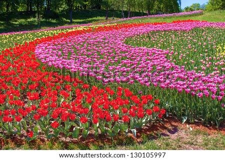 Terrain landscape lined with brightly colored tulips